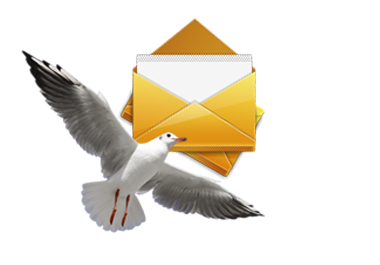 contact form seagull